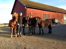 Nya ridskole/kurshästar!